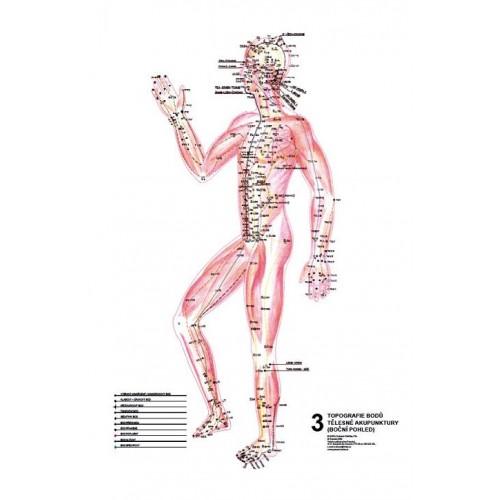 Akupunkturni Body Mudr R Ruzicka Csc Amala S R O